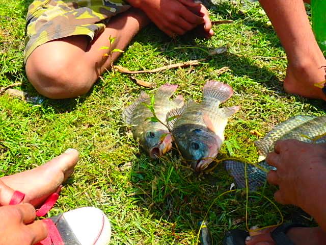 ネパール ポカラ 魚①