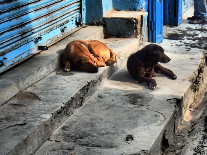 ネパール カトマンズ 犬