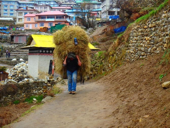 ネパール パクディン 青年