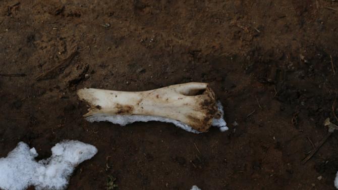 ネパール タンボチェ 骨