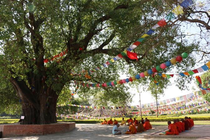 ネパール ルンビニ 菩提樹