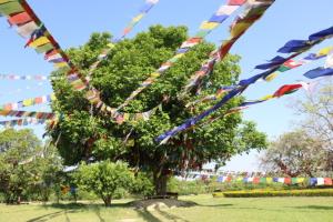 ネパール ルンビニ 木