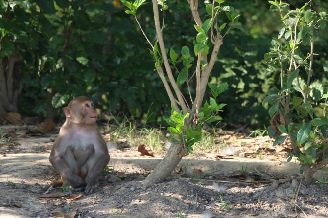 ネパール ルンビニ 猿①