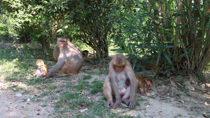 ネパール ルンビニ 猿②
