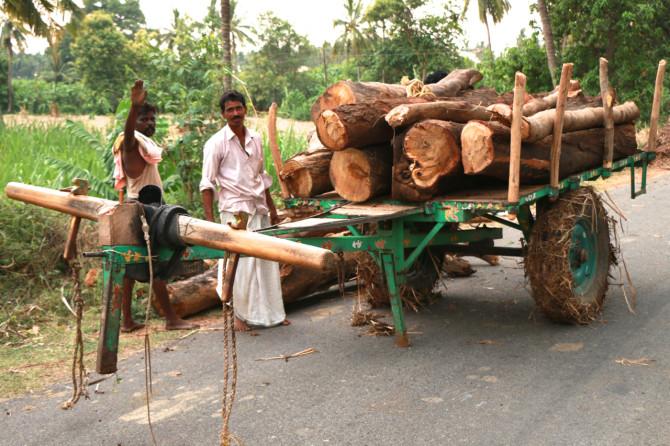 インド ハンピ 木運び