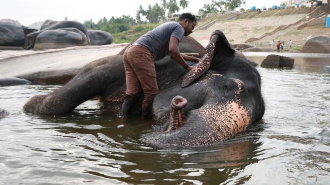 インド ハンピ 象