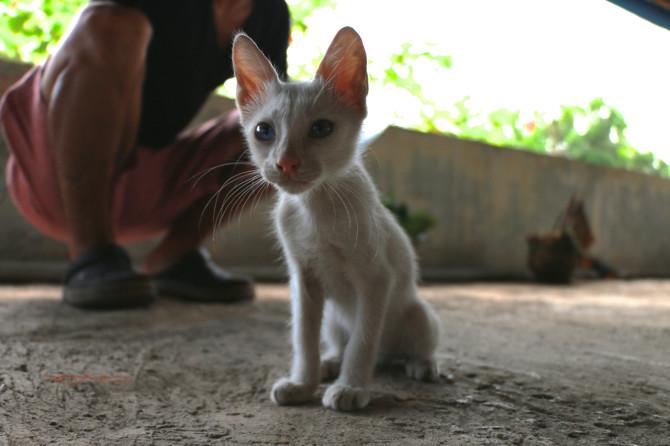 インド アレッピ 猫①