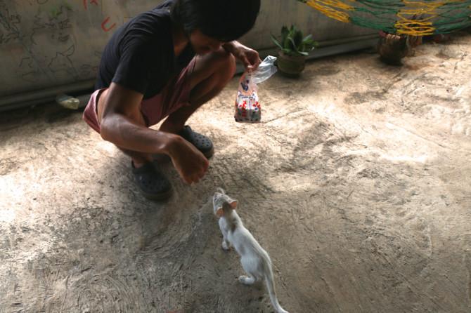 インド アレッピ 猫②
