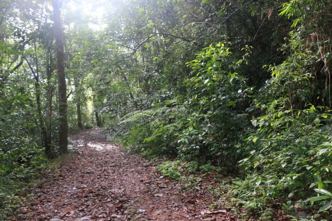 スリランカ ラトゥナプラ 森①