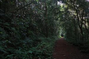 スリランカ ラトゥナプラ 森②