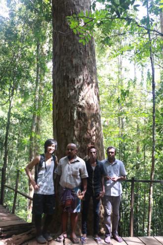 スリランカ ラトゥナプラ 大木①