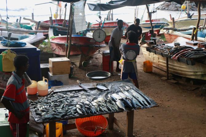 スリランカ ゴール 魚