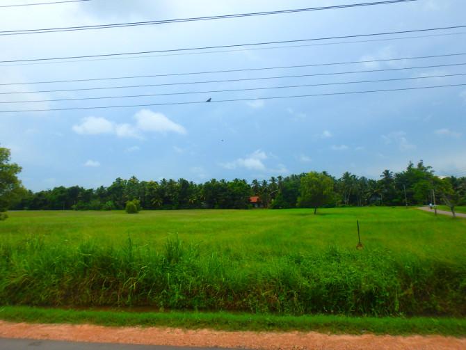 スリランカ ニゴンボ 景色①