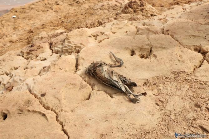 ダナキルにある硫黄泉