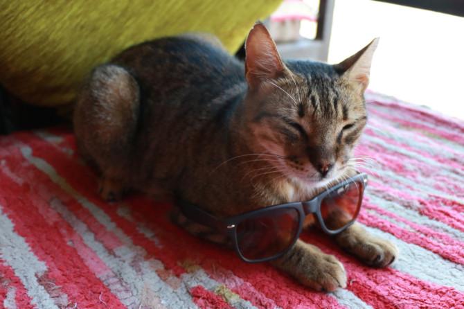 エジプト ダハブ 猫