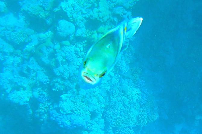 エジプト ダハブ 魚③
