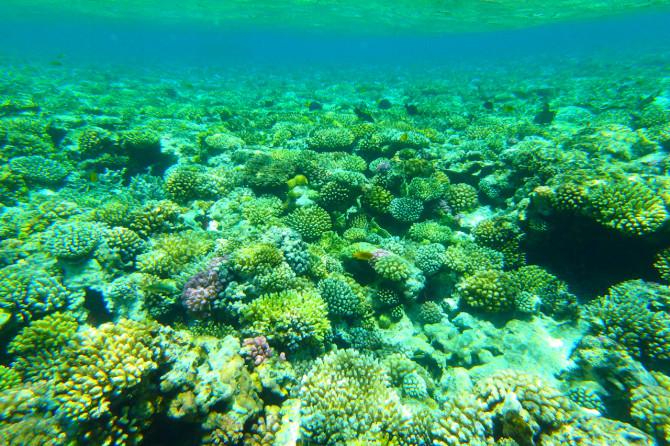 エジプト ダハブ 珊瑚