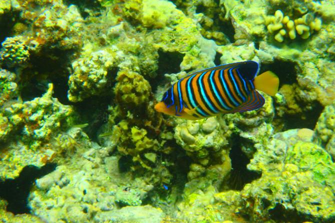 エジプト ダハブ 魚④