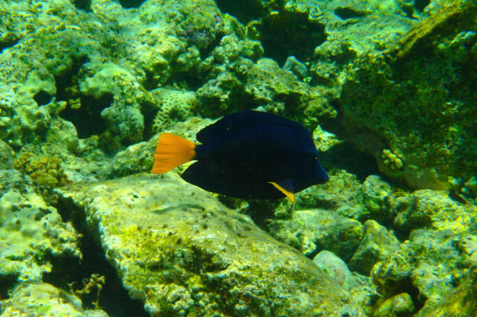 エジプト ダハブ 魚⑤