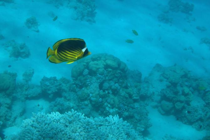 エジプト ダハブ 魚①