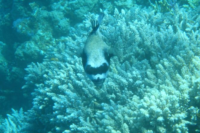 エジプト ダハブ 魚②