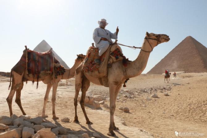 ギザ ピラミッド ラクダ