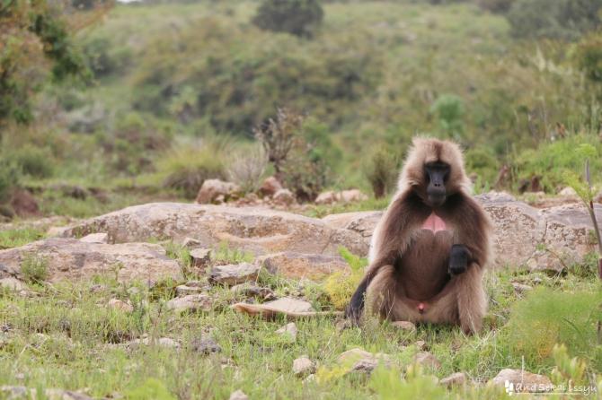 シミエン国立公園のバンブー
