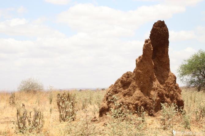 タランギーレ国立公園の蟻塚