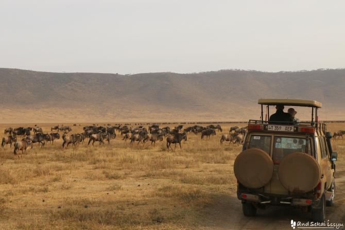 ンゴロンゴロ自然保護区のヌーの群れ