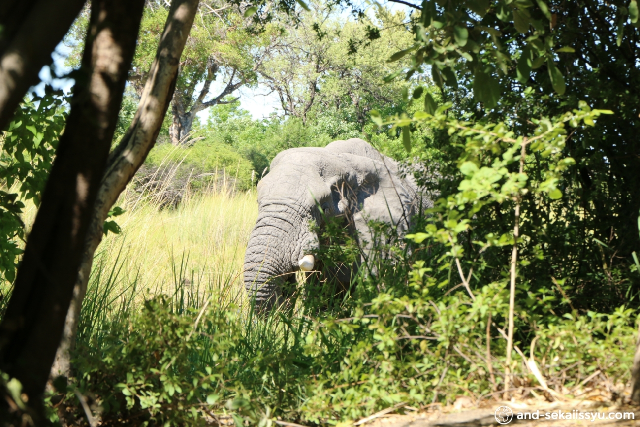 ボツワナの世界遺産オカバンゴデルタでモコロのツアーに参加してきた