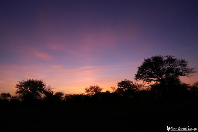セレンゲティ国立公園のサンライズ