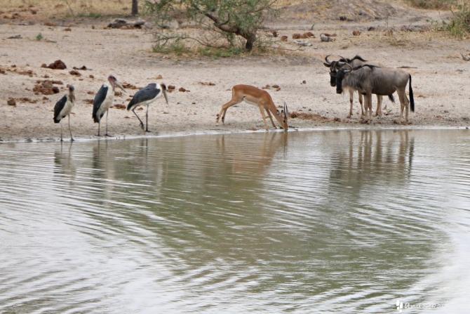 タランギーレ国立公園の池