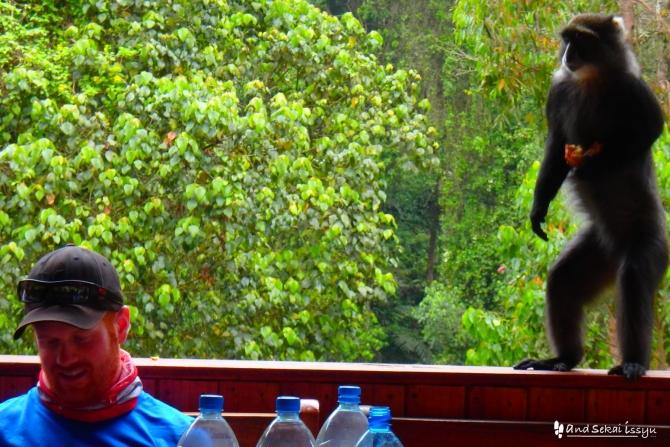 マチャメゲートの猿