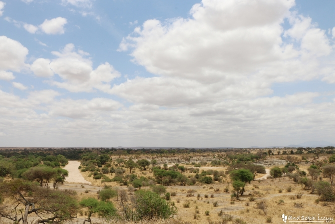 タランギーレ国立公園の草原