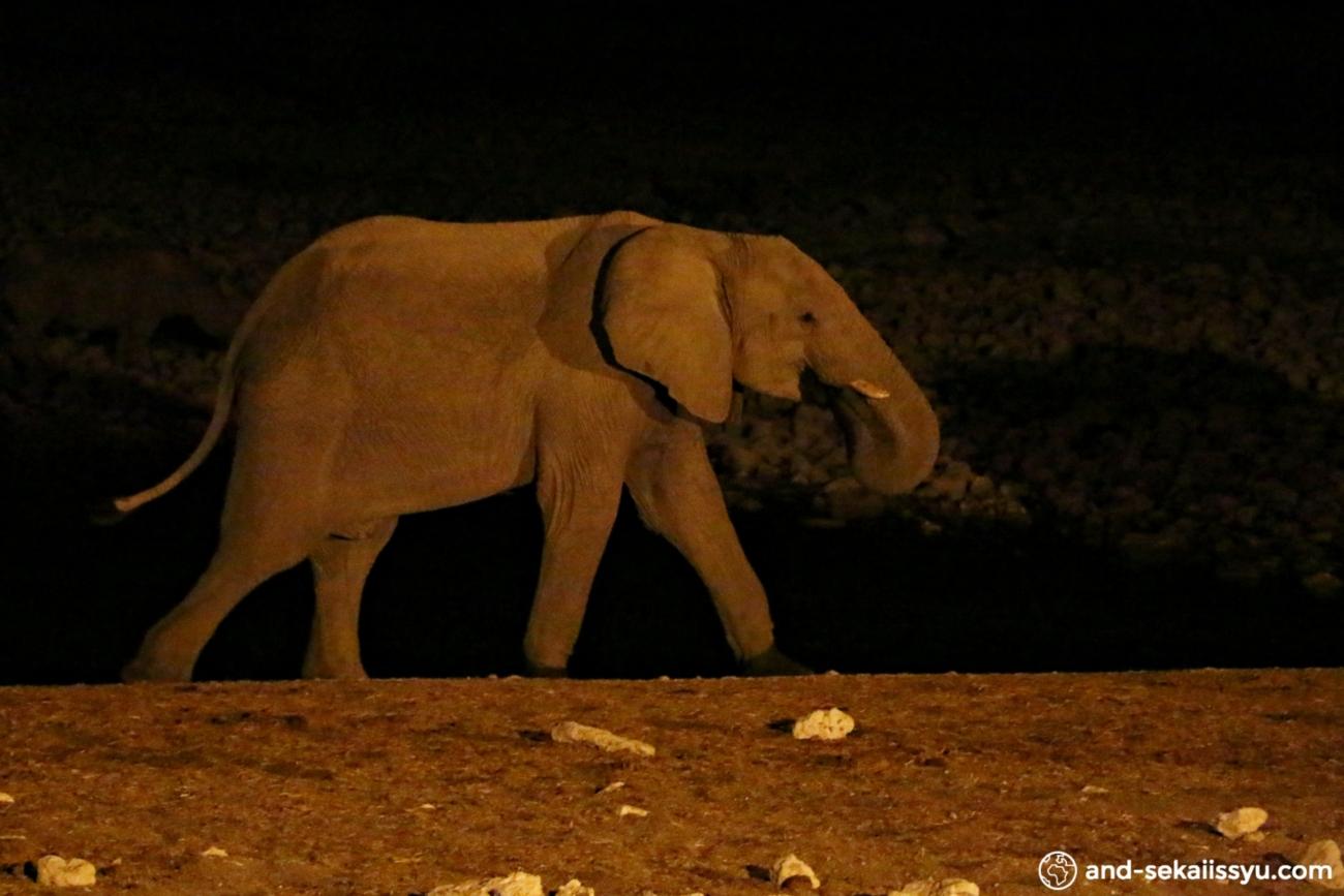 ナミビアでレンタカー。エトーシャ国立公園でサファリ