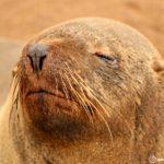 ケープクロスとスケルトンコースト|20万頭のオットセイと世界一危険な海岸!!【6日目】