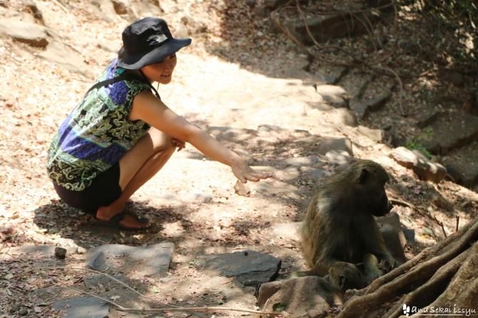 ビクトリアの滝(ザンビア)でサルに近づくゆきさん