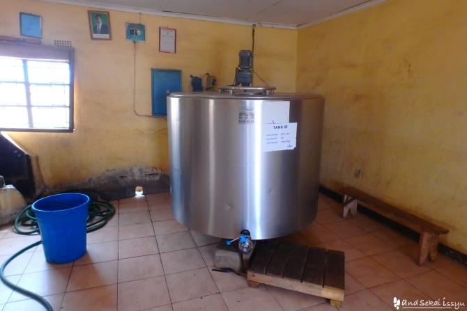 ここは各農家からミルクを集めて、品質管理や業者に販売を行っている所。 この銀色の大きなタンクで管理しています。   各農家が個人で取れる量は1日約0.5〜3L。 銀色の容器に入れて持って来る仕組み。 新しい農民がやってくると、それを知らないでプラスチックの容器で持って来るから、 ミルクの質が下がってしまうそう。  業者に買ってもらうにはミルクのランクがあって、 それによって買取の値段も変わる。  ちゃんと分かっているんだか、いないんだか…。 農家全体に分かってもらう事が難しいみたい。  乾季と雨季でミルクの量の差がとても大きいそう。 牛は280日で産まれてくるので、140日で産まれてくるヤギなんかと比較して、 ミルクが出る時期が限られています。 それに加え、基本的にその辺に生えている草で育てるので、 草が育ちにくい乾季は必然的にミルクの量は少なくなってしまいます。 まだまだ、エサを買って育てるという環境ではないみたい。  今までミルクについて、と言うか酪農について全然知らなかったので、 ハヤトさんが話してくれる事がめちゃくちゃ楽しい!!!      さて、ミルクセンターを後にして、いよいよ派遣先の農場へ。 農場までは、タウンからバスで行かないとなりません。 でも、ワイルドハヤトさんはいきなり1台の車を止めます。  なんと、職場の車。 ちゃっかり乗せてもらう事に。  そして、こちらがハヤトさんが住んでいる家。 デッカッッッ!!!  なんとロッヂをまるまる借りているみたい! さすが農場。 でも、水出ないし、計画停電+普通の停電は当たり前…。 この辺りは、アフリカの隊員さん本当にみんな凄いと思います。  さらに、ハヤト邸にはたまに、  侵入者がいます。笑  元々、ロッヂなのでロッヂとして使用する関係者がいるんだとか。笑 いや、笑えない!笑 貴重品は鍵の付いた部屋に入れられても、 せっかく汲んできた水を使い、キッチンを汚し、使ったリネンはそのまま…。 プライベートなんてあったもんじゃありません! そして、ロッヂの管理人でもありませんから!笑  ハヤトさんの仕事 ハヤトさんは獣医としてGolden Agricultural research trustに派遣されています。 家畜の健康管理から、飼育環境の整備、提供農家の訪問など、 農場の外にも飛び出して活動されています。  この農場は元々イギリスやスエーデンなどの支援により、 土地に適した飼育の仕方などを、モデル的な立場で地域に還元していくために 設立されました。  歩いて回るのが困難なほど広大な土地で、牛、ヤギ、鳥などの 家畜の管理、リサーチをしている農場です。  全然知識がなかった私は…  私は…(?)  あ、りょうくんはまたお腹壊して寝ていました。 全然知識がなかった私は、 1日ハヤトさんについて回る事に!  朝のお仕事はヤギの蹄(ひづめ)切り! ヤギの蹄切り? なんだか、最初から面白そうな仕事!笑  ここのヤギは放牧の時間が短く、歩行距離が不足しているので 適度に蹄が削られず内に巻いてきたり、 巻いたところからダニやバイ菌が入って膿んできてしまうそう!!!                          職員のおっちゃんと一緒にヤギを捕まえる!!! 蹄を見て、切る! 前足も後ろ足もくまなくチェック!  変形した蹄からダニがでてきた子もいました´д` ;可哀想。  妊娠中は蹄を切ったりするストレスでエサを食べなくなる事があるので、 ちゃんと見極めてケアしていきます。  ヤギってじっくり見た事なかったけど、 可愛い♡  メーメー鳴くのも面白いし、可愛い♡  数頭の爪切りを終え、お散歩の時間。  この時間が短いから爪が変形してしまう。 じゃぁ、その原因って??  それは、あまりにも明確な事でした。  職員が遅く来て、早く帰るから。  This is アフリカ! その緩さは羨ましくなる事があります!    ここはヤギの消毒プール。 定期的に消毒して、清潔を保つ事が大切なんだって。  次に行ったのはここ、冷蔵庫! 中には卵がいっぱい! その隣の冷蔵庫には…  ヒナがいっぱい! 冷蔵庫じゃなくて保育器でした! 鶏は21日、ホロホロ