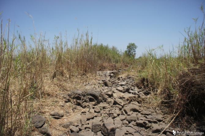 ビクトリアの滝(ザンビア)の草