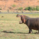 チョべ国立公園のボートサファリツアー|世界一の象の密集度を誇る国立公園のはずが・・・。
