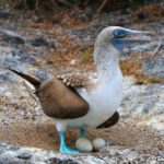 イザベラ島のトンネルズツアー|サメとシュノーケリング&足が青いアオアシカツオドリ!!【動画あり】