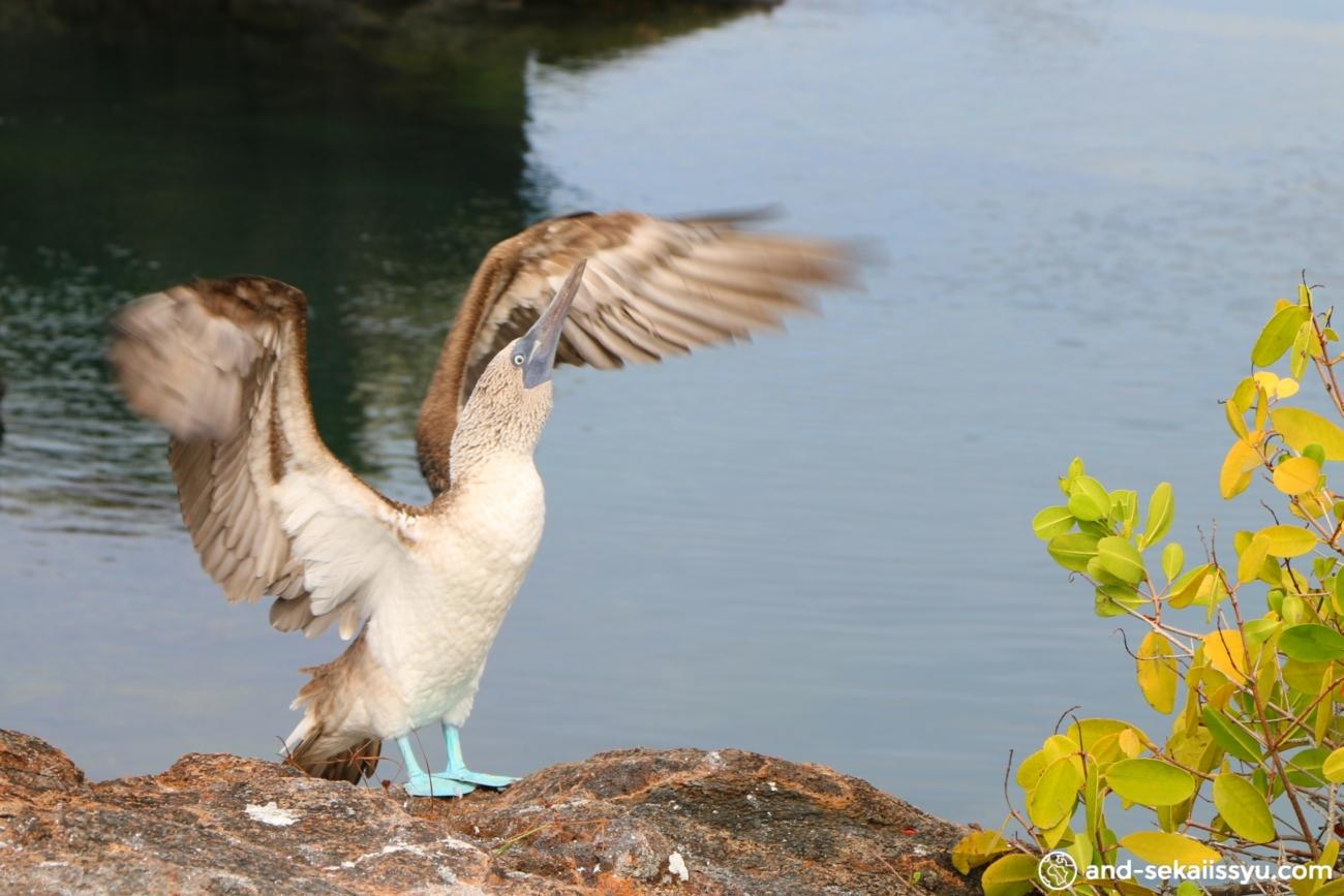 ガラパゴス諸島で一番大きなイザベラ島‼︎トンネルズシュノーケルツアーでサメが‼︎タツノオトシゴが‼︎