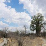 プラネットバオバブ|ボツワナのグウェタにある宿(キャンプサイト)情報
