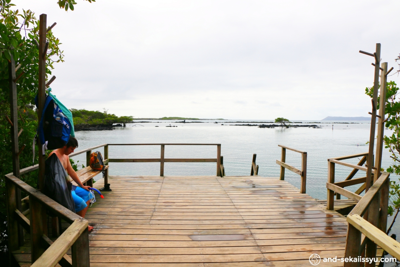 イザベラ島|ゾウガメ保護センターで交尾を目撃‼︎ガラパゴスイグアナと一緒にシュノーケル‼︎
