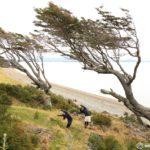 ウシュアイアの斜めの木(フラッグツリー)|徒歩で世界最南端の都市観光!!