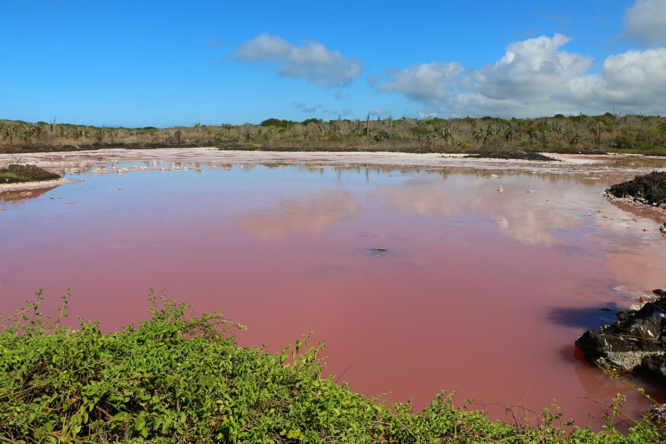 サンタクルス島|ラス・グレイタスと途中にあったピンクの湖‼︎チャールズ・ダーウィン研究所‼︎自然の白と青が作るトルトゥーガ・ベイ‼︎