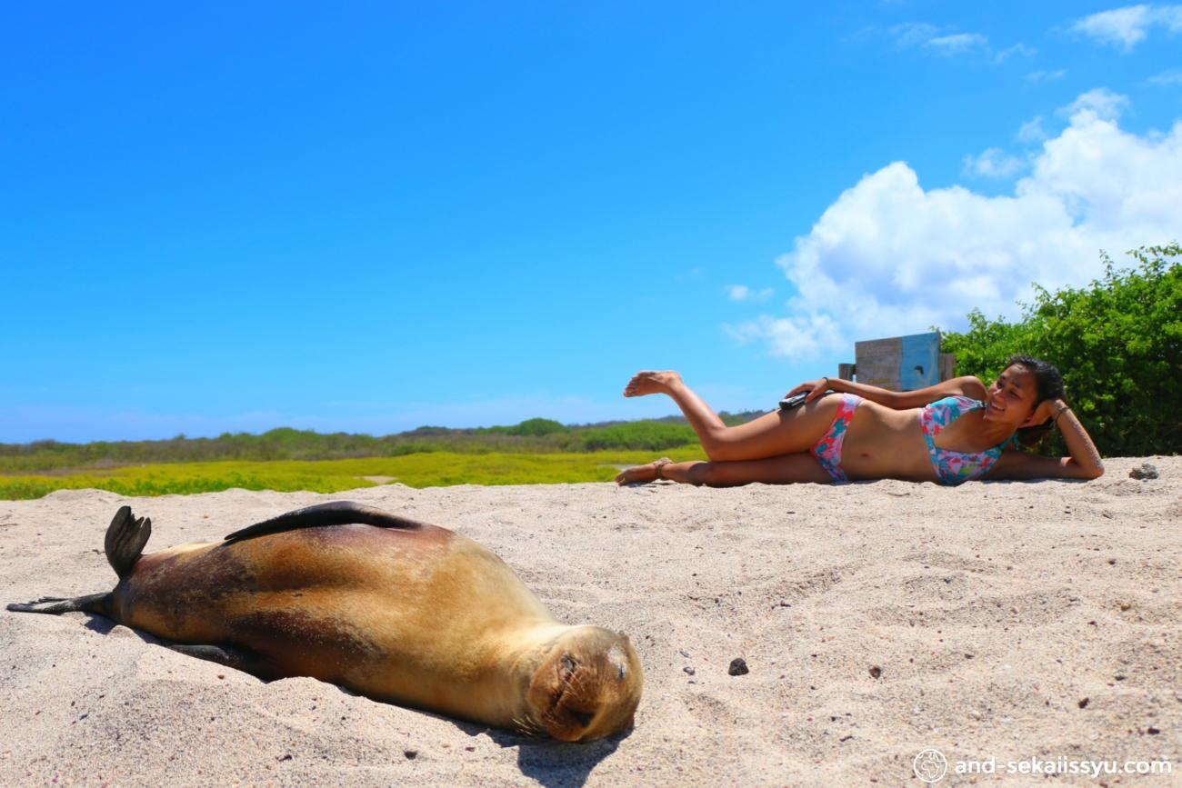 サンクリストバル島|貴重なグンカンドリを追跡‼︎アシカとカメとシュノーケリング‼︎