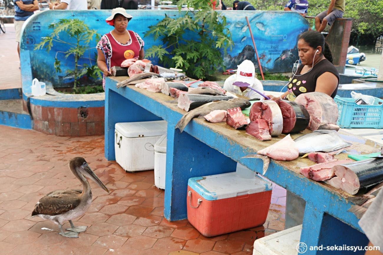 ガラパゴス諸島(サンタクルス島)の魚市場ガラパゴス諸島(サンタクルス島)の魚市場