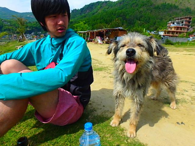 ネパール ポカラ 犬