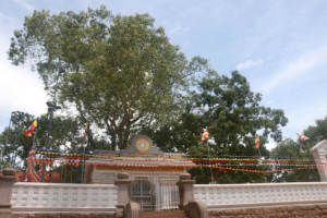 スリランカ アヌラーダプラ 菩提樹